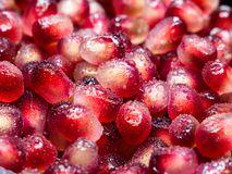 Macro shot of fresh pomegranate seed with water droplets royalty free stock image
