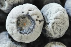 Macro shot of frozen blueberries Stock Images