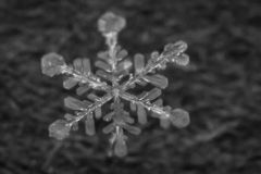 Macro Shot of Frozen Snowflake 7 stock photos