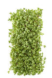 Macro shot garden cress on a white background. Macro shot garden cress on a white Royalty Free Stock Images
