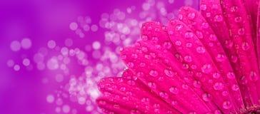 Gerber blossom Stock Photo