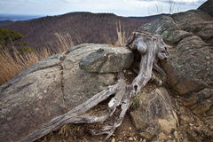 Macro shot of gnarled tree trunk in the Blue Ridge. Skyline Drive overlooking the Blue Ridge Mountains Stock Images