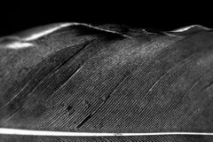 Feather in black and white stock images