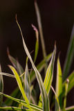 A macro shot of grass in the sunlight Stock Photo