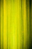 Macro shot of green bamboo texture Stock Image