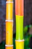 Macro shot of green bamboo texture Stock Photography