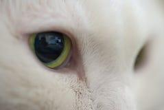 Macro shot green eyed cat Stock Images