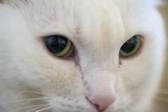 Macro shot green eyed cat Royalty Free Stock Photography