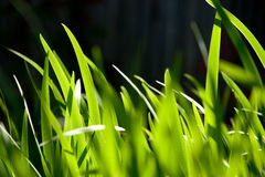 Macro shot of green grass Stock Images