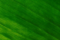 Macro Shot of a Green Leaf Royalty Free Stock Photos