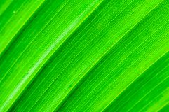 Macro shot of green leaf Royalty Free Stock Photos