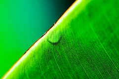 Macro shot of green leaf Stock Images