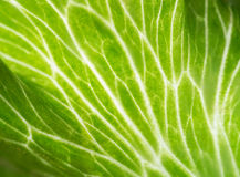 Macro shot of green leaf Stock Photos