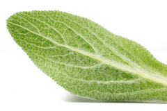 Macro shot of a green leaf texture Royalty Free Stock Images