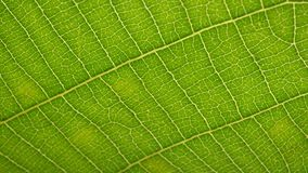 Green leaf analysis. Macro shot of green leafs and plants been analyzed stock footage