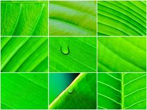 Macro shot of green leaves, nature pattern background Stock Photography