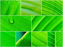 Macro shot of green leaves, nature pattern background Royalty Free Stock Image