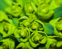 Macro shot of a green plant Royalty Free Stock Photo