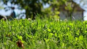 Macro shot of greenery stock video