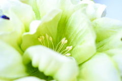 Macro shot handmade artificial flowers Stock Photo