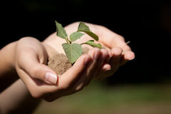 Macro shot of hands holding a seedling. Hand holding a new plant with a pile of dirt Royalty Free Stock Photos
