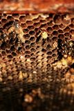 Macro shot of honeycombs. royalty free stock images