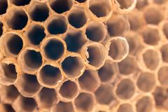 Natural texture of a wasp nest in detail royalty free stock images