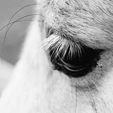 Macro shot of a horse eye. Royalty Free Stock Photos
