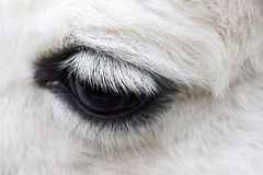 Macro shot of a horse eye. Royalty Free Stock Photography