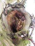 Macro shot of a knothole. Border of a branch Royalty Free Stock Photo