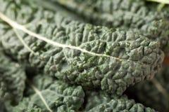 Macro shot of lacinato kale Royalty Free Stock Images