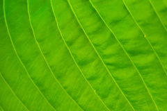 Macro shot of a leaf Stock Images