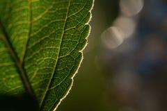 Macro shot of leaf. Nature background photography Royalty Free Stock Images