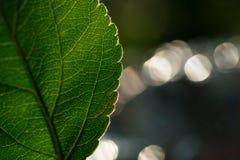 Macro shot of leaf. Nature background photography.  Stock Photo