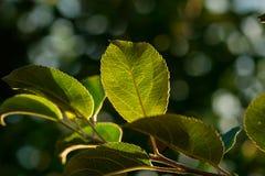 Macro shot of leaf. Nature background photography. Closeup photo. Macro shot of leaf. Nature background photography. Closeup photo Royalty Free Stock Photos