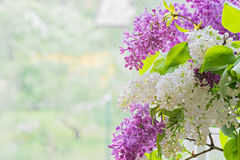 Macro shot of lilac bouquet Stock Photography