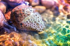 Sea pebbles, stones and rocks, laying on beach sand Stock Image