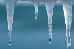 Macro shot of melting icicles with droplets Stock Photo