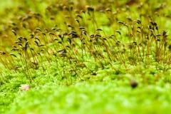 Macro shot of moss stock photos