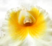 Macro Shot of an Orchid in the Center Royalty Free Stock Image