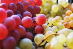 Macro Shot Photography of Green and Red Grapes Royalty Free Stock Images