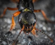 Macro Shot Photography of Insect Head stock photos
