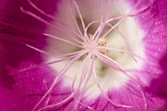 Macro shot of a pink flower.  Stock Photography