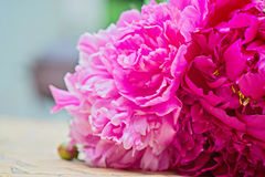 Macro shot of pink peony flowers Royalty Free Stock Images