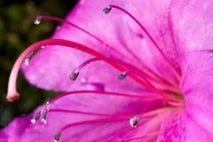Macro shot of  flowers Royalty Free Stock Image