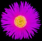 Purple Flower with Yellow Core. A macro shot of Purple Flower with Yellow Core Stock Photos