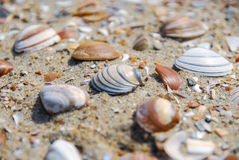 Macro shot of red, blue and brown mussels in sand Stock Photography