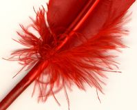 Macro shot of red feather stock photo