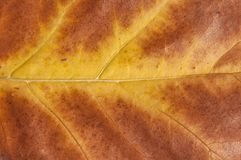 Macro shot of red and yellow natural leaf tree plant like ecology. Wallpaper Stock Photography