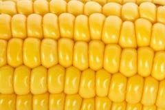 Macro shot of ripe corn Royalty Free Stock Photos